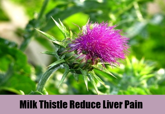 Milk Thistle Reduce Liver Pain