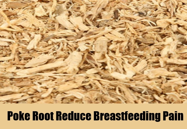 Poke Root Reduce Breastfeeding Pain