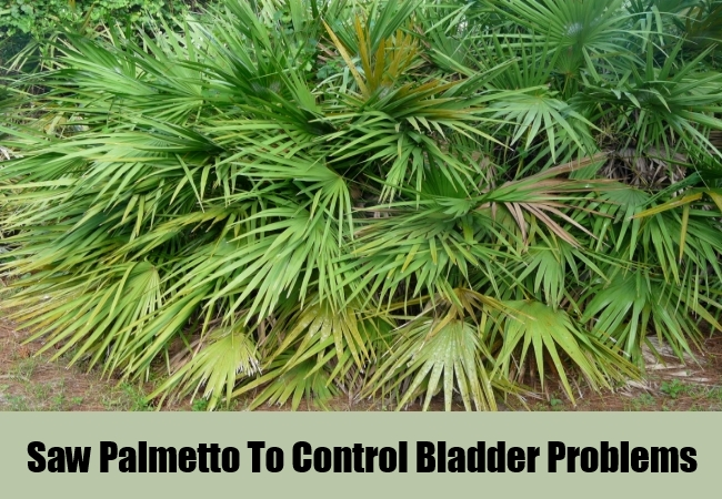 Saw Palmetto To Control Bladder Problems