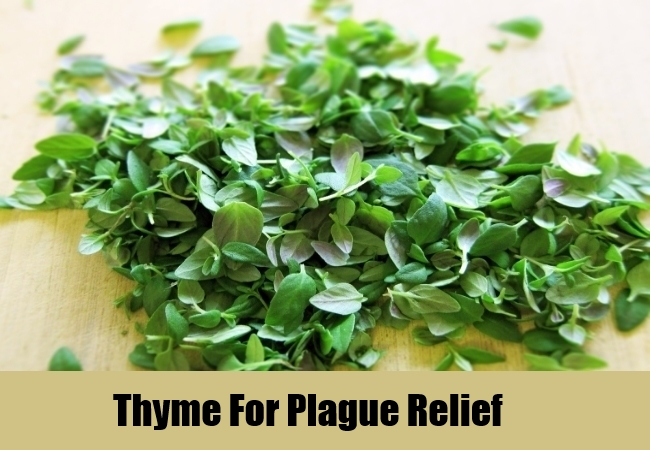 Thyme For Plague Relief