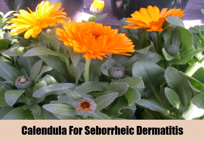 Calendula For Seborrheic Dermatitis