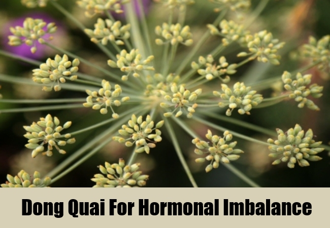 Dong Quai For Hormonal Imbalance