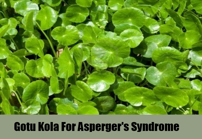 Gotu Kola For Asperger's Syndrome