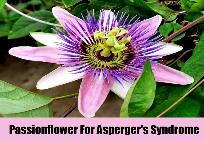 Passionflower For Asperger's Syndrome