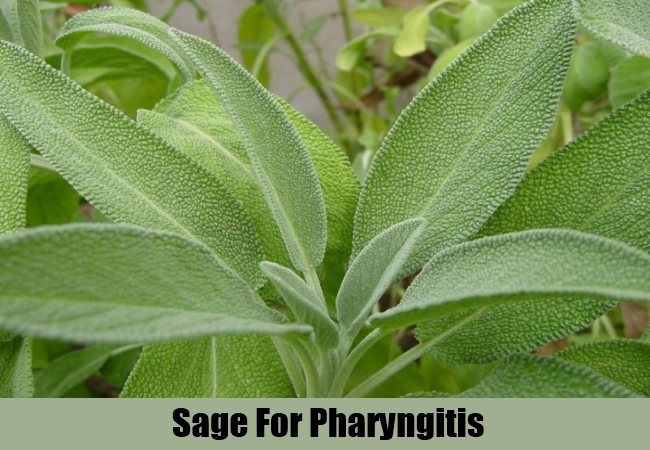 Sage For Pharyngitis