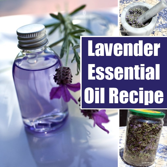 Make Lavender Essential Oil