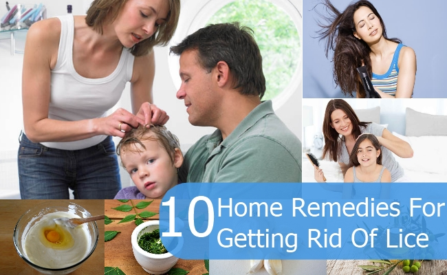 Remedies For Getting Rid Of Lice