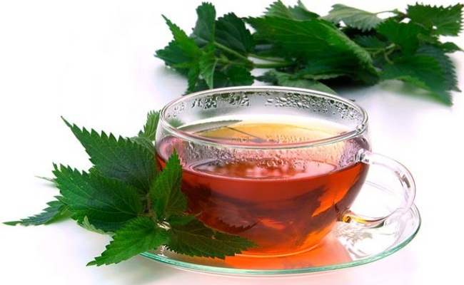 Nettle Tea Leaf
