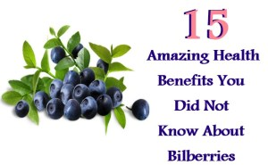 Amazing Health Benefits You Did Not Know About Bilberries