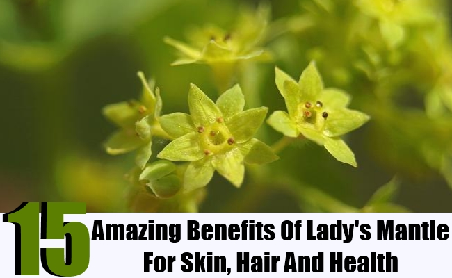 15 Amazing Benefits Of Lady's Mantle For Skin, Hair And Health