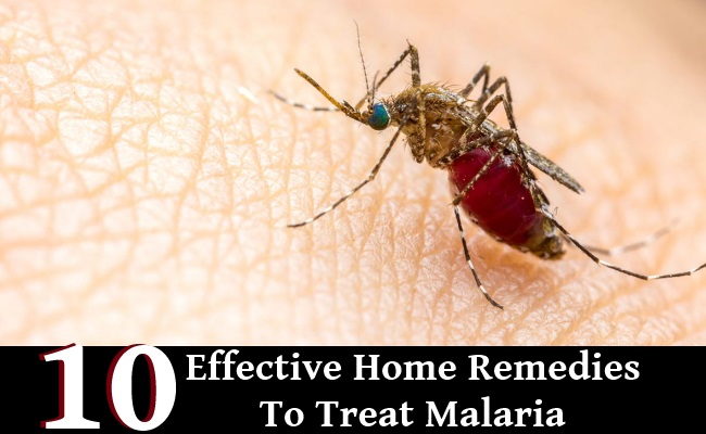 10 Effective Home Remedies To Treat Malaria