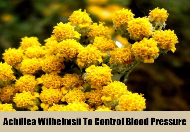 achillea-wilhelmsii-to-control-blood-pressure