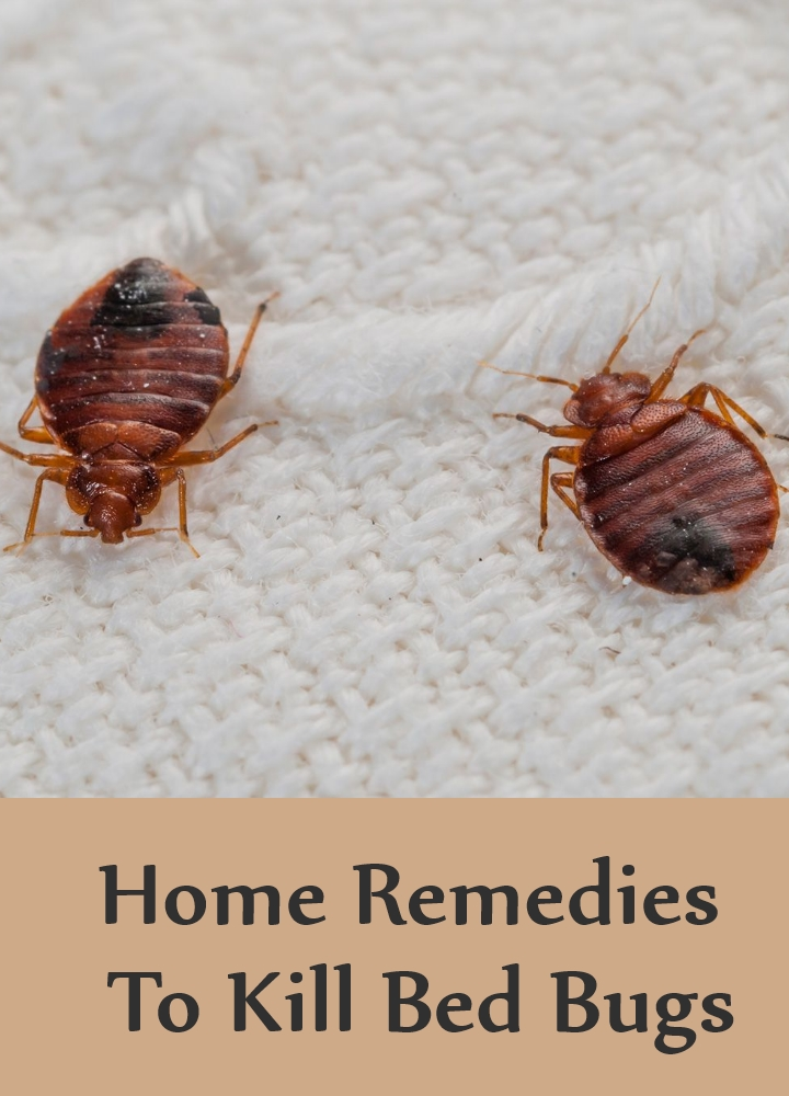 Bed Bugs Kill With Alcohol