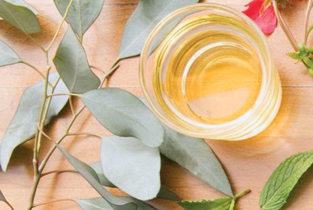 Eucalyptus And Peppermint Oil Blend