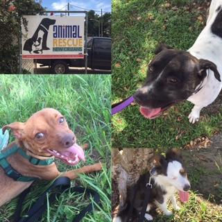 search-influencers-animal-rescue-of-new-orleans