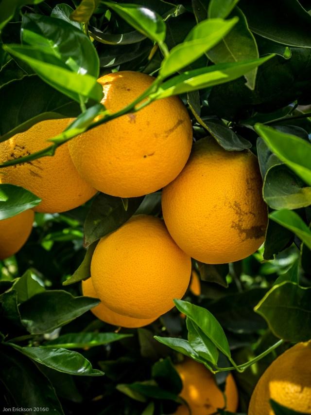 The Organic Farm at El Mogor