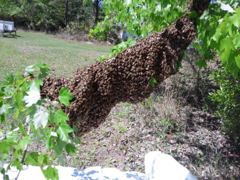Combined swarms Mar 29 2015