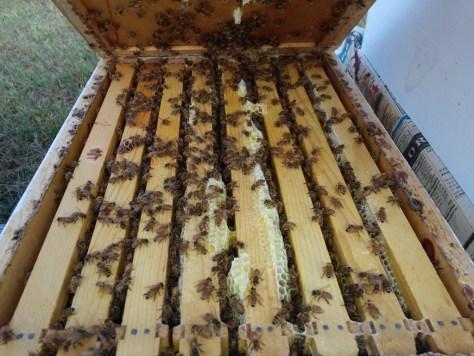 Hive 14