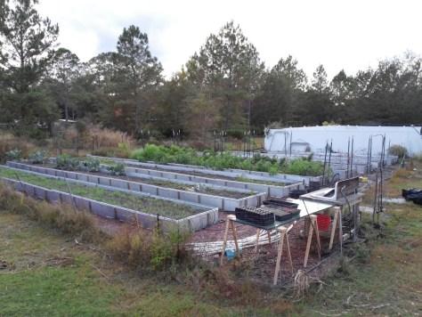Late season garden