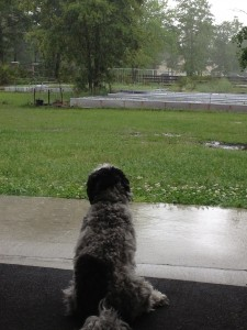 Watching the rain May 2013