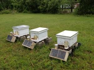 Closed hives May 2013