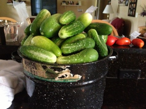 Pickles in progress