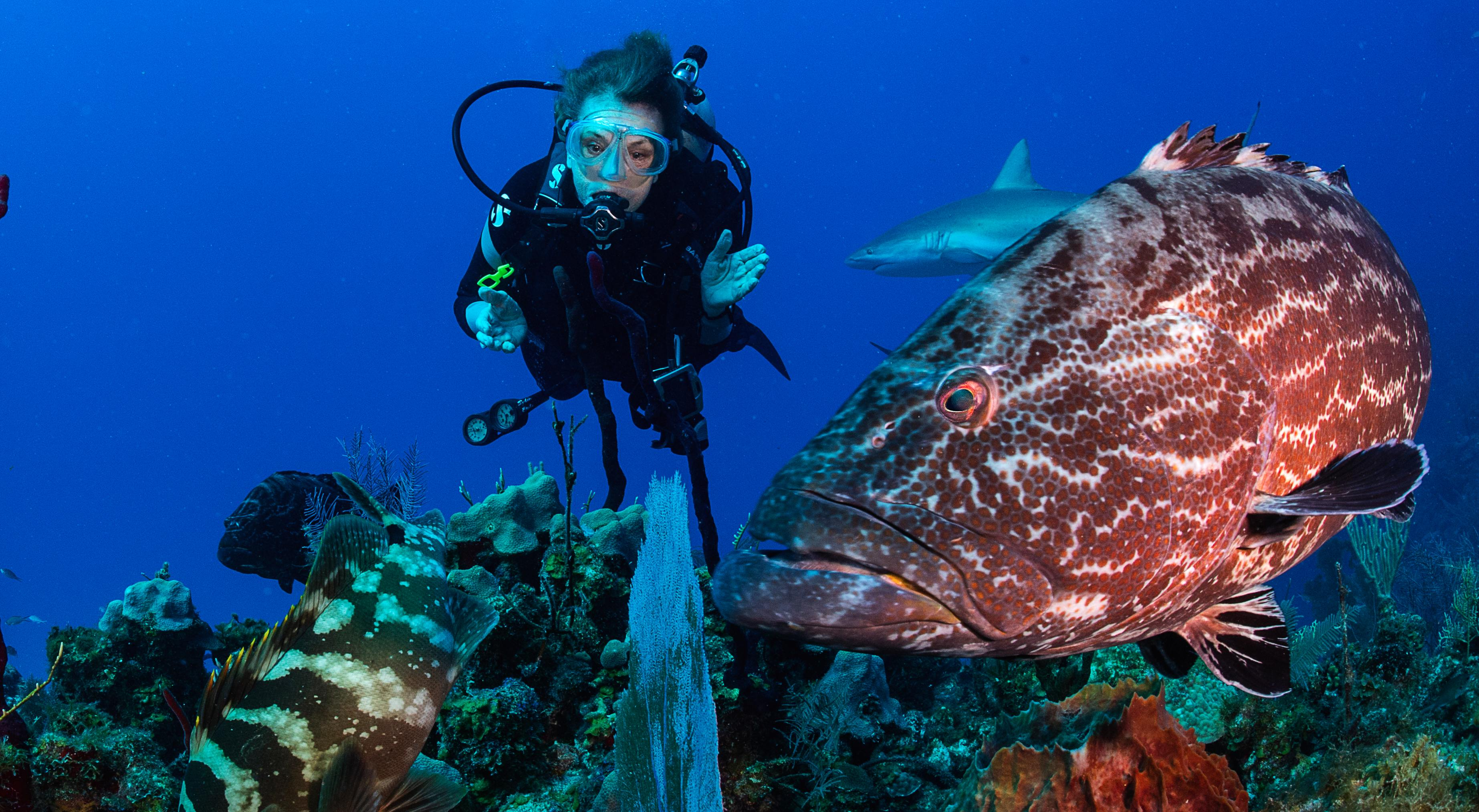 But tell as a little bit about your awakening and wonder to the natural world. Aurora Expeditions Sea Of Cortez Cruise With Dr Sylvia Earle Seatrade Cruise Com