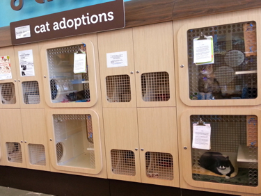Adoptable cats lounge in their condos.