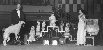 Seattle Kennel Club 1966 Show