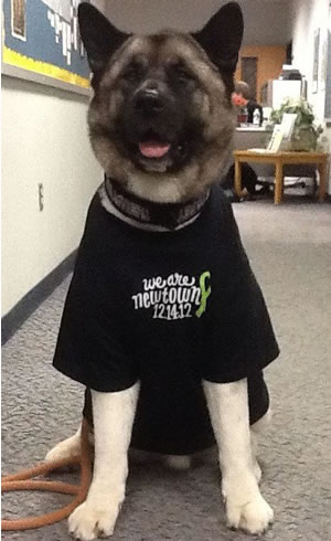 Spartacus, a 3-year-old Akita owned by therapy-dog handler Brad Cole, of Southbury, Conn., wears a Newtown benefit T-shirt, one of several designs marketed nationally following the Dec. 14, 2012 shootings.