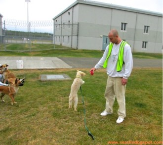 Trainer Jesse and his dog Fred (Sir Frederick) take a break from training to play a game of fetch.