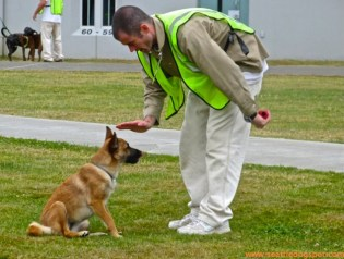 An offender trains a dog named Missy to sit as part of the Prison Dog Program at Stafford Creek Correctional Center.