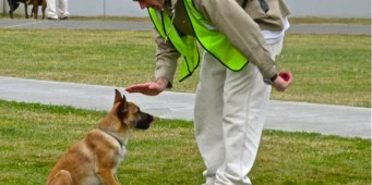 Stafford Creek Corrections Center dog training program.