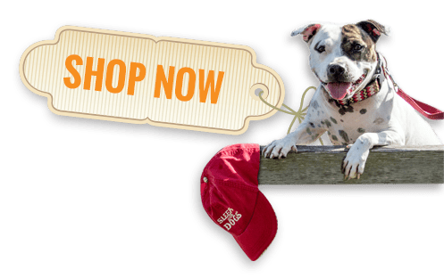 Shop Now at Seattle DogSpot