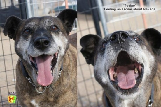 Tucker is a happy boy now. Photo from Safe Haven Rescue Kennel.