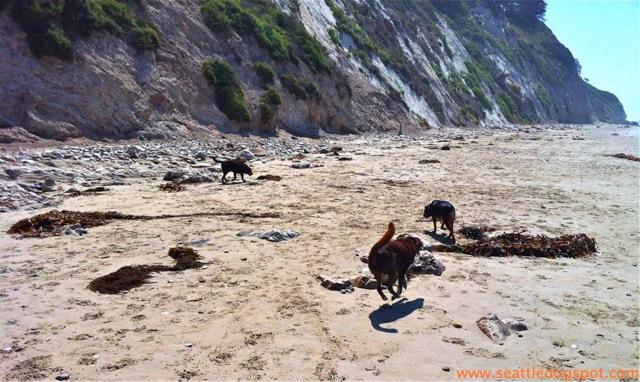 Dylan and Miguel play by the cliff on Arroyo Burro off-leash beach. Photo from Seattle DogSpot.