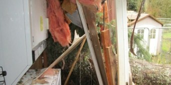 Windstorm Destroys Washington Dog Rescue Group's Facility
