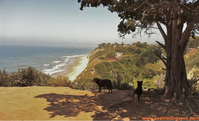 Dylan and Miguel take in the spectacular view from the off-leash area at the Douglas Family Preserve. Photo from Seattle DogSpot.