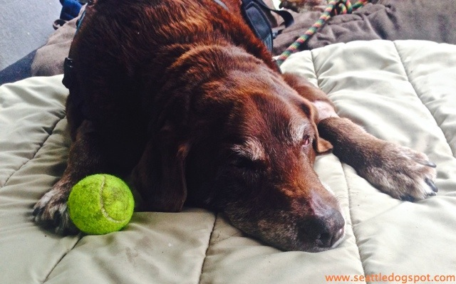 How to Know When It s time to Put Down Your Old Dog  663f0775f