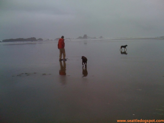 The wide, flat beach at Seven Devils State Recreation Site is great for dogs. Photo from Seattle DogSpot.