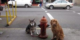 Dog thief on the prowl in Queen Anne
