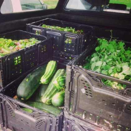 All the vegetables in Green Juju are organic and sourced from local farms. Photo from Green Juju Kitchen.