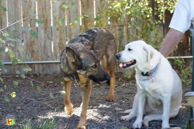 Wiley with his new sister Bella. Photo from Safe Haven Rescue Kennel.