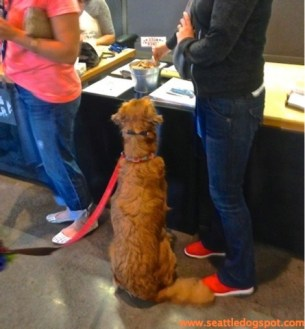 A dog stops at the reception desk for a treat. Photo from Seattle DogSpot.