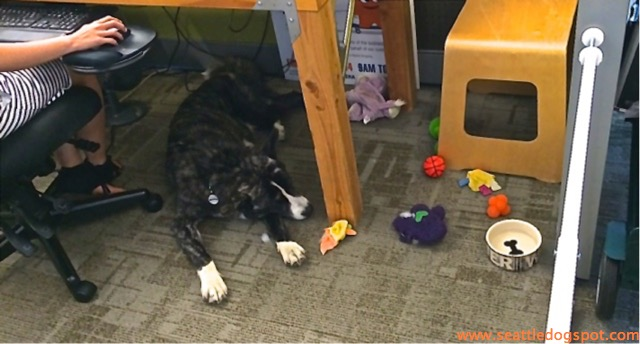 Amazon's dog friendly environment helps reduce stress for all it's employees.