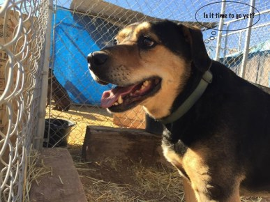 """Cookie is one of the 14 dogs from the Olympic Animal """"Sanctuary"""" still in Arizona. Photo from Sanctuary Watch."""