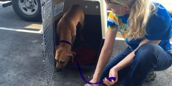 Washington Rescues Take in Dogs Rescued from South Korean Meat Trade