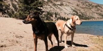 A visitors guide to dog friendly Bend Oregon