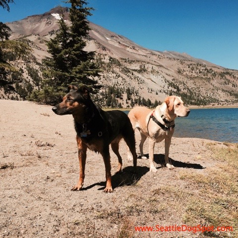 dog friendly Bend, OR