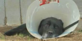 City of Arlington Posts Update on Tethered Dog